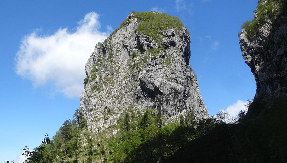 Procinto - Dolfi-Rulli