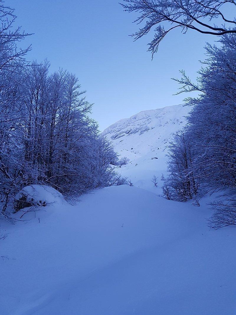 Salendo, sullo sfondo la NE dell'Alpe di Succiso