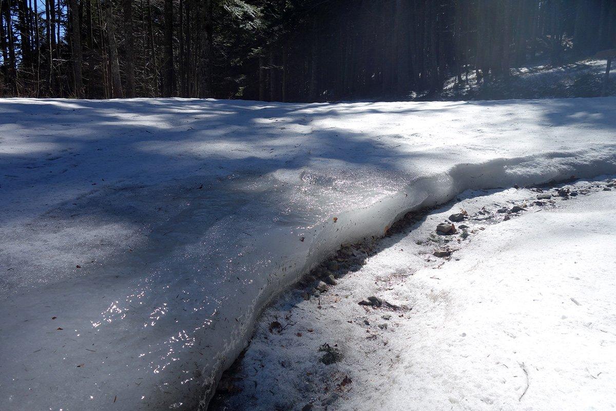 La strada forestale in ottime condizioni!